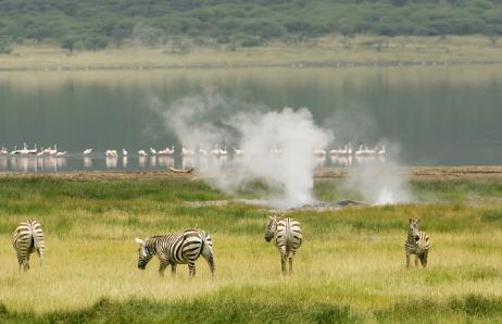 Bogoria met zebra's